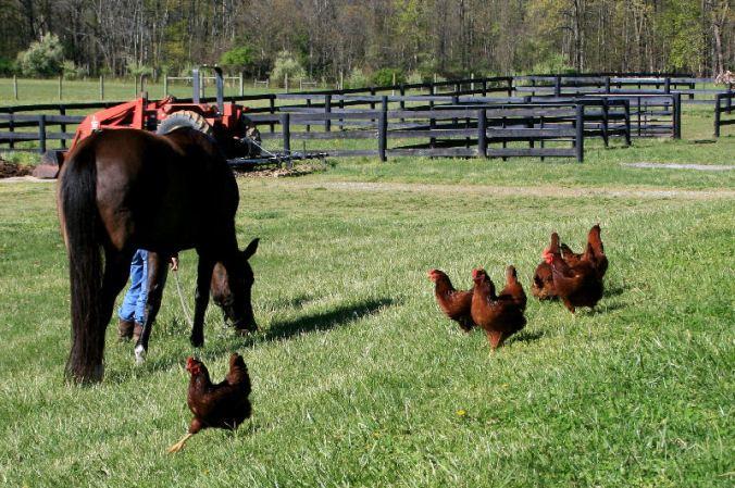 The bird-herd looking for...greener pastures?