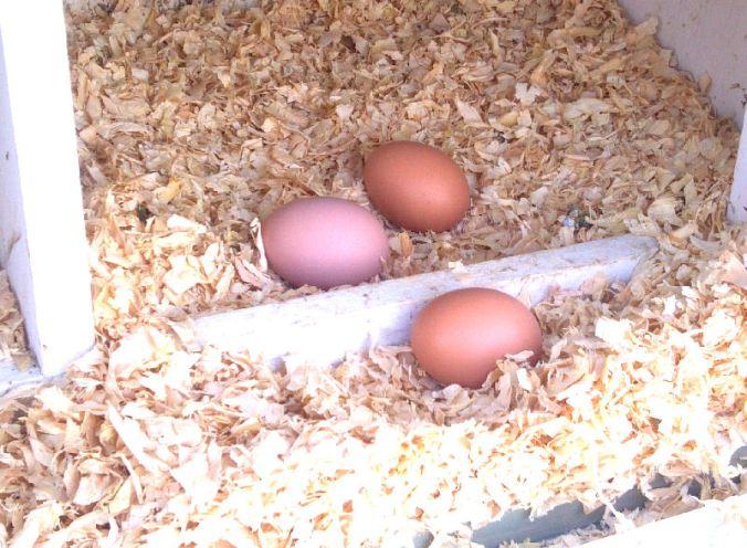 Trio of Eggs